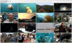Meduza Potw�r / Monster Jellyfish (2010) PL.TVRip.XviD / Lektor PL